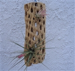 Hanging Cholla Tile