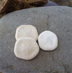 Mini Sea Cookies-Sand Dollars