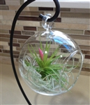 Hanging Plant Terrarium with Stand and Plants FREE Shipping