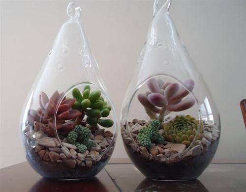 - 2 Pack Succulent Terrariums-Lg Tear Drop