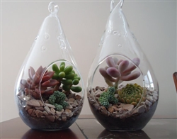 2 Pack Succulent Terrariums-Lg Tear Drop