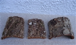3 Pack Small Tree Bark Tiles