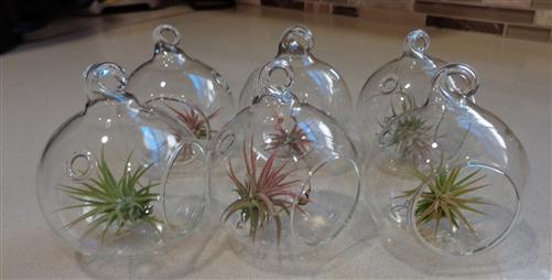 6 Pack Mini 2 Glass Plant Orb Terrariums With Air Plants
