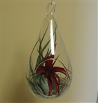 "Large 7.25"" Glass Tear Drop Plant Orb/Terrarium With 3 Air Plants"