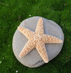 Mini Sugar Starfish