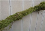Large Moss Log 3 Feet-Real Moss