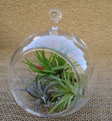 "4.5"" Glass Plant Orb/Terrarium Kit"