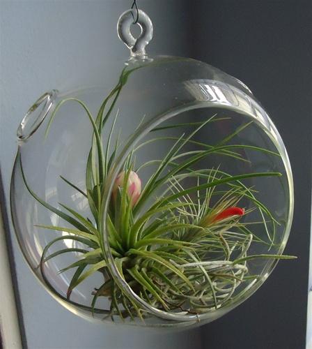 Plant terrariums supplies