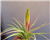 Smithsonian Gardens Tillandsia Order for Sarah Tietbohl May 1st delivery