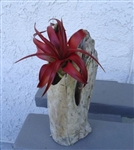 Small Standing Driftwood Pot