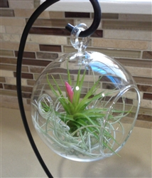 Hanging Plant Terrarium with Stand and Plants